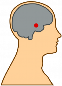 brain with nucleus